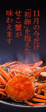 松葉ガニとせこ蟹
