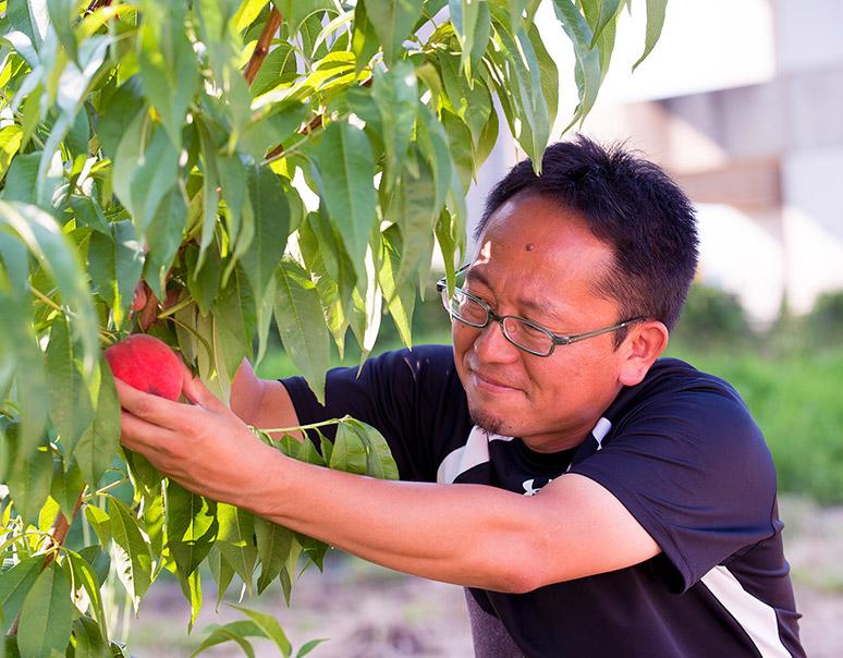 福島の凄腕生産者 古山さんの桃のお取り寄せ通販