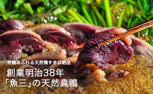 創業明治38年「魚三」の天然真鴨