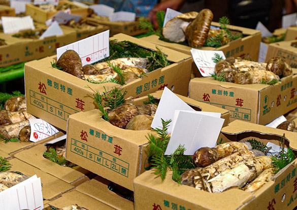 国産松茸(まつたけ)の旬の時期は9〜10月。北海道、岩手県から出荷が始まり、宮城県、長野県、岐阜県、兵庫県、広島県、山口県と順番に南下していきます