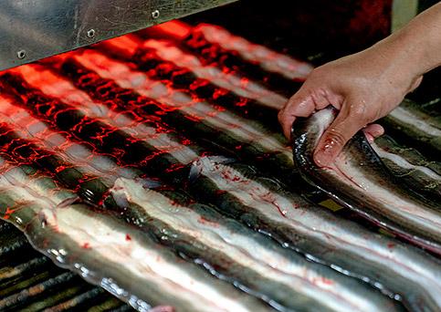 国産うなぎ通販。浜名湖食品のうなぎ工場。気温や湿度を考慮し、手で機械を微調整し続けています