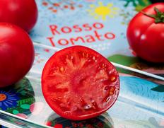 2/1〜6出荷 『ロッソトマト』愛知県産 約900g S〜Lサイズ (10玉前後)贈答 ※常温