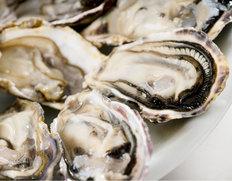 兵庫県室津産『殻付き牡蠣(生食用)』 4kg(44〜68個入) 牡蠣剥きナイフ付