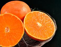3/2〜7出荷 『紅香(べにかおり)』長崎県産柑橘 大玉 約3kg(8〜12玉)※常温