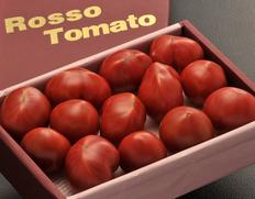 1/20〜25出荷 形状不揃い『ロッソトマト』愛知県産 2S〜2Lサイズ 約1.2kg