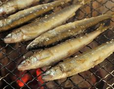 琵琶湖産 姉川の天然鮎  約500g(目安として20〜35匹ほど)※冷凍