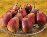「メープルレッド」山形県産西洋梨 約3kg(8〜11玉)※常温の商品画像
