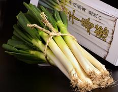 3/15〜19出荷 『千寿葱(金品・極太)』約3kg(8〜18本入) 化粧箱入