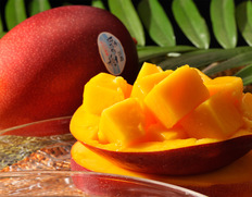 4/27〜5/2出荷 宮崎産完熟マンゴー『時の雫』 3Lサイズ 450g〜509g×2玉 化粧箱入