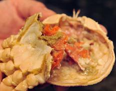 12月到着 『茹でセコ蟹(こっぺ)』1杯 活けで230g級 丹後半島沖産  ※冷蔵