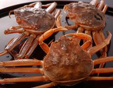 12月到着 『活けセコ蟹(こっぺ)』1杯 230g級 丹後半島沖産  ※冷蔵