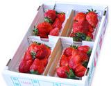 『菅谷さんのいちご』茨城県産 お試し不揃い 約1kg(250g×4P) ※冷蔵の商品画像