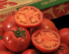 6/8〜20出荷 『スーパーフルーツトマト』 茨城県産 産地箱 約2.5kg(14〜28玉入) ※常温