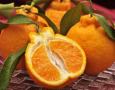 4/13〜18出荷 橋爪俊典さんの『俊菓デコ』和歌山県産柑橘  秀品 6玉 約1.7kg ※常温