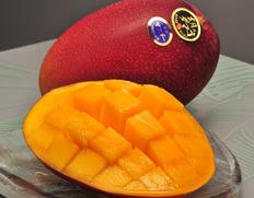 完熟マンゴー『太陽のタマゴ』宮崎県産 約900g(2〜3玉)化粧箱