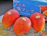 『塩マンゴー』沖縄県宮古島産 約1kg(2〜3玉)化粧箱の商品画像