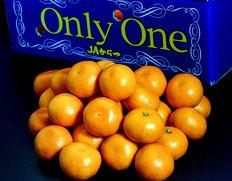佐賀県産みかん『Only One(オンリーワン)』