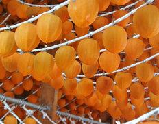 1/27〜2/1出荷 JAふくしま未来『伊達のあんぽ柿』福島県産 L〜4Lサイズ 約230g(4〜8粒)×4パック ※常温