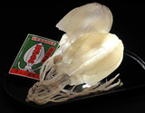 『イカの王様アオリイカ』水いかのスルメ (中サイズの小型 約80g) 2枚 合計 約160g※冷凍の商品画像