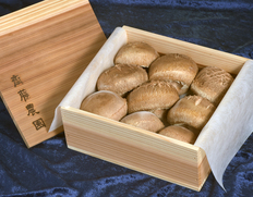 秋田県 齋藤農園の原木椎茸  直径約7cmサイズ×9個 木箱入り ※冷蔵