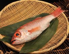 そのままで出荷 『のどくろ 鮮魚 (超特大)』600〜690g 1尾 日本海山陰西部産 ※冷蔵