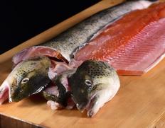 白神山地の清流で育つ幻の魚『イトウ』のお取り寄せ通販