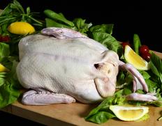 『フランス鴨(バルバリー種)フレッシュグリラー雌(中抜き)』1羽(1.4〜1.8kg) 青森県産 ※冷蔵