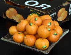 4/13〜18出荷 オレンジ『オア』 イスラエル産 約2kg(14〜20玉)
