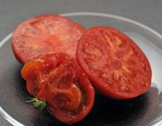 野生派トマト『狼桃』のお取り寄せ通販