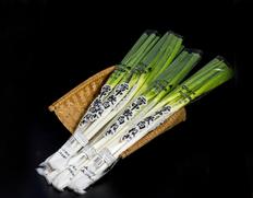 2/1〜6出荷 『雪中軟白ねぎ』 山形県鶴岡産 2〜4本×4袋