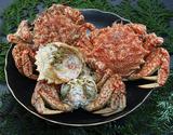 『トゲクリガニ(桜蟹)』青森県陸奥湾産 オス 約1kg(5杯前後) ※冷蔵の商品画像