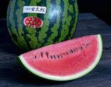 『甘太郎(かんたろう)スイカ』 千葉・富里産 1玉 3〜4Lサイズ 約8kg A品 ※冷蔵の商品画像