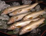 四万十川 天然鮎 (竿漁 活け〆) 約600g(3〜12尾程度)高知県産 ※冷凍の商品画像