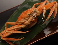 12月到着 『茹でセコ蟹(こっぺ)』1杯 活けで250g級 丹後半島沖産  ※冷蔵