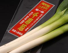2/3〜8出荷 『千寿葱(金品・極太)』約1kg(5本前後)化粧箱入 ※冷蔵