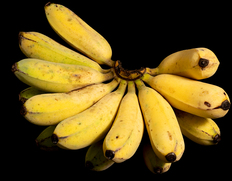 6/21〜7/3出荷 荘司さんが作る 沖縄県産 アップルバナナ 1.5kg(1〜2房)※常温