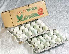 【不揃い】田子たまご村「緑の一番星」 30個