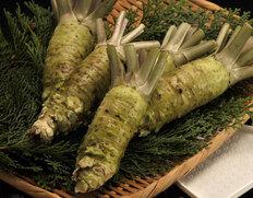 収穫でき次第出荷◇ 中伊豆の山葵 サイズ混合(良品のみ) 約1kg(大きさはお任せ) ※冷蔵