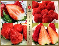3月下旬〜4月下旬出荷 【第一弾】『ブランドいちご4品種食べ比べ』 約1kg(いちごさん、あまおう、スカイベリー、きらぴ香)