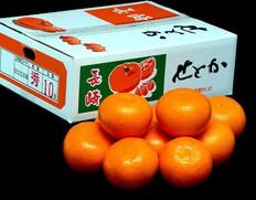 3/2〜14出荷◇ 『せとか』長崎県産柑橘 秀品 約3kg(8〜15玉)贈答用 ※常温