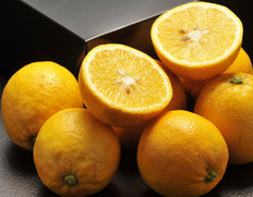 4/13〜18出荷 『レモネード』 静岡県産 2S〜2Lサイズ 約2.5kg ※常温