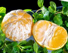 2/1〜6出荷 『田中雄大さんのパインみかん』熊本県産柑橘 約2kg  S〜Lサイズ(目安として22〜40玉)  ※常温