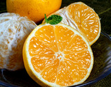 『田中雄大さんのパインみかん』熊本県産柑橘 約2kg  S〜Lサイズ(目安として22〜40玉)  ※常温の商品画像