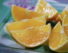 3/30〜4/4出荷 『湘南ゴールド』神奈川県産柑橘 無選別 約2.5kg