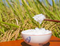 新潟県産 JA柏崎 令和二年度 新米 「葉月みのり」新品種 白米 5kg ※常温