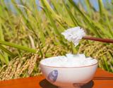 新品種「葉月みのり」令和元年度 新潟県産 白米 5kg ※常温の商品画像