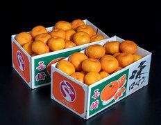 1/27〜2/1出荷 『味ロマン』長崎県産みかん 2S〜Mサイズ 約2.5kg×2箱