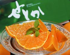 1/25〜2/6出荷 『せとか』佐賀県産柑橘 M〜Lサイズ 約2.5kg(12〜18玉)化粧箱 ※常温