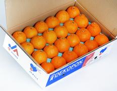 4/13〜18出荷 『デコポン(不知火)』熊本県産柑橘 約5kg(15〜24玉)