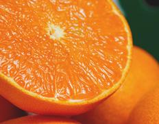 1月下旬〜2月上旬出荷◇ 訳あり『せとか』佐賀県産柑橘 約2.5kg スレ傷あり・サイズ不揃い ※常温